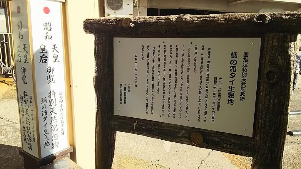 鯛の浦タイ生息地