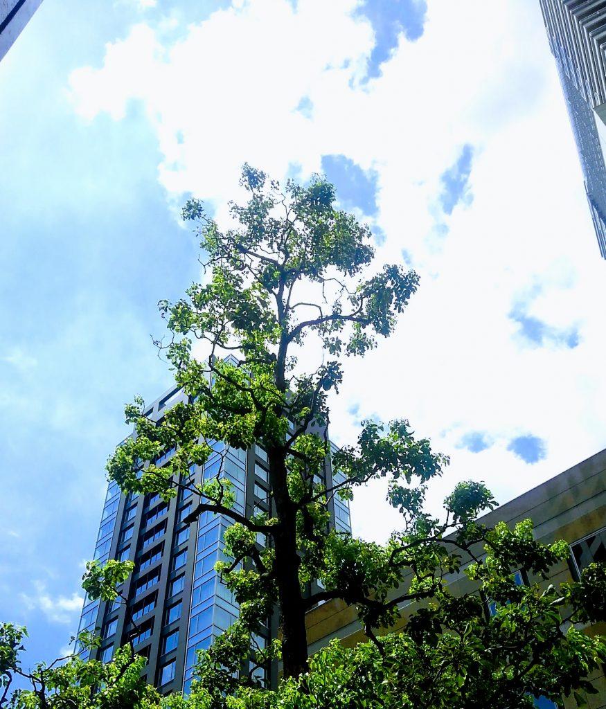 ビルの谷間から 8月15日、東京都心の午前、ボーとしながら青空を漂う雲を見ているのが気持ちよい
